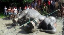 Insolite : Eléphant