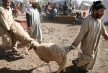 L'offre de cheptel pour Aid Al-Adha couvre largement la demande dans la province d'Essaouira