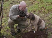 Insolite  : Grosse truffe