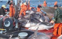Hausse de 7% des  débarquements de la pêche côtière et  artisanale à fin août 2016