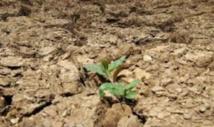 Le changement climatique rend les végétaux moins sensibles à la sécheresse