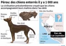 Sous un parc animalier au Pérou, des chiens sacrifiés il y a 1.000 ans
