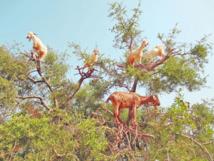 Tout un patrimoine forestier national menacé de désertification