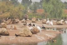 Inauguration du parcours muséographique du Jardin zoologique national