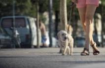 Insolite : ADN des chiens