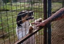 Insolite : Havre de paix pour chiens