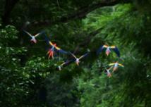Plus de 200 espèces d'oiseaux à risque d'extinction non répertoriées