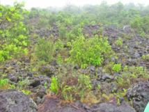 Les Eaux et Forêts et la Douane conjuguent leurs efforts pour sauver flore et faune sauvages