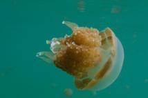 Insolite : Piqués par des méduses