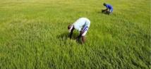 Un revenu minimum garanti pour une révolution agricole africaine
