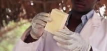Un savon contre le paludisme