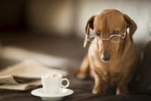 Insolite : Café à chiens