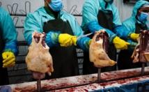 Les foies gras bulgares et hongrois à l'assaut du monde