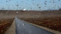 Des milliers de milliards d'insectes migrent par les airs