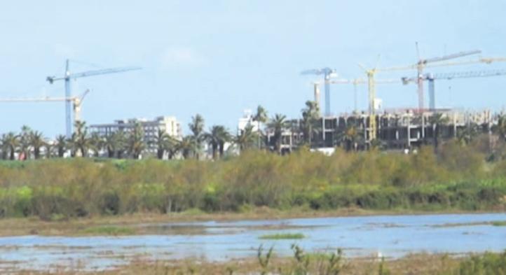 La dégradation des zones humides