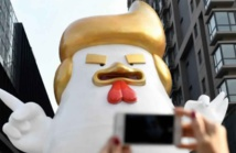 Trump réincarné en poulet