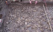 Un champ de patates datant de 3.800 ans découvert au Canada