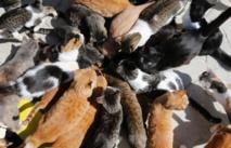 A Chypre, le défi de nourrir des chats en surpopulation
