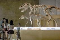 La Mongolie veut récupérer ses dinosaures pillés