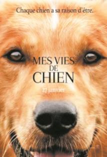"""L'équipe du film """"Mes vies de chien"""" accusée de cruauté animale"""
