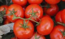 Redonner du goût aux tomates industrielles
