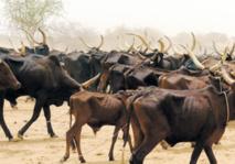 Niger : Résoudre durablement  les conflits agriculteurs-éleveurs