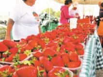 Kénitra accueille un Festival international de la fraise dédié aux richesses de l'Afrique