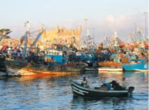 Hausse de la valeur de poissons débarqués au port d'Essaouira