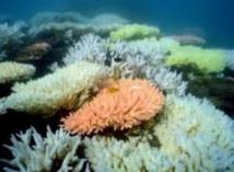 Coup dur pour la Grande Barrière de corail