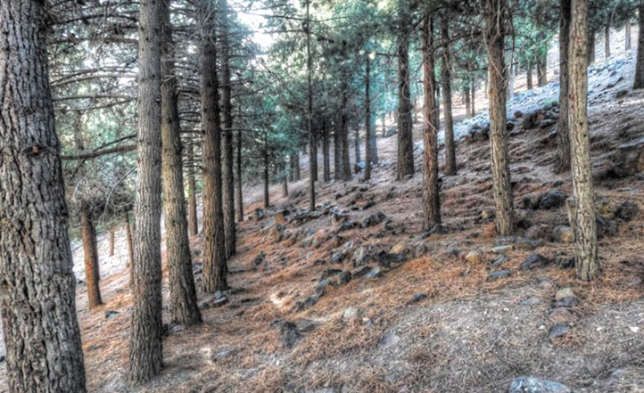 Les pays méditerranéens en conclave à Agadir pour la protection des forêts