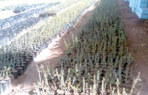 Agadir : Le partenariat au service de l'arganier