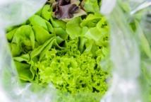 Insolite : Une chauve-souris dans la salade