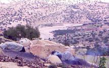 Les services des Eaux et Forêts mis à l'index : L'arganier au cœur d'un litige à Essaouira