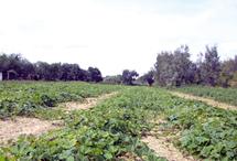 Essaouira : Plan Vert provincial pour redynamiser le secteur agricole