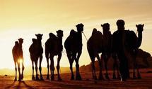 Gestion des ressources humaines : Le Maroc se dote de répertoires Emplois-Métiers
