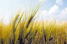 Négociations sur le climat : Les agriculteurs en première ligne