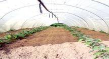 Périmètres irrigués de Oued Eddahab : Une prouesse agricole dans le désert
