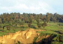 L'écotourisme au service du développement rural : Projet de parc naturel à Jbel Bouhachem