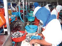 Traitement et congélation des produits de la mer : Une société de Dakhla primée à Genève