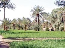 Nouvelle source de revenus à Tata : Le tourisme oasien a le vent en poupe