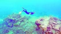 L'Australie doit protéger davantage ses récifs coralliens