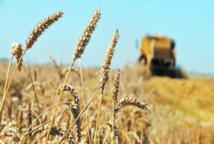 Hausse de la facture des importations alimentaires mondiales