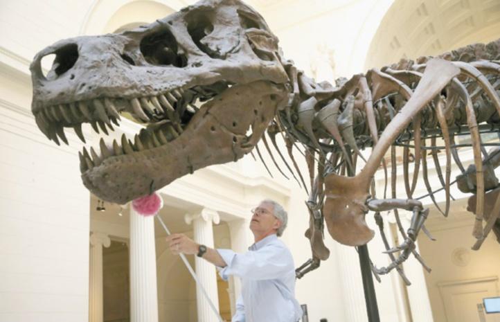 Le T.Rex n'était pas un dinosaure à plumes
