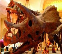 Les dinosaures n'étaient pas aussi grands qu'on le pensait