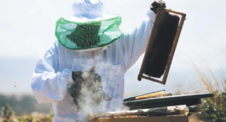 Le miel éthiopien, un trésor au potentiel sous-exploité