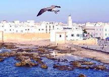 Il sévit encore dans les environs d'Essaouira : Le monstre de Ghazoua court toujours