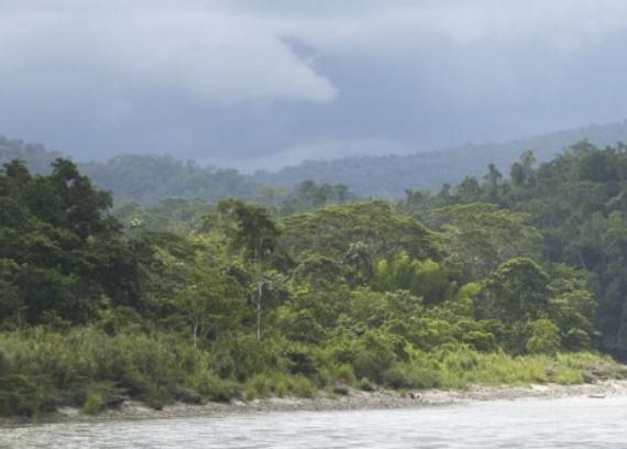Les projets de barrages sur l'Amazone dévasteraient l'environnement