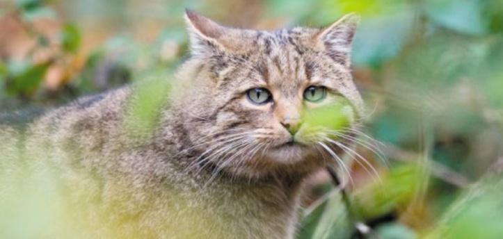 Une immense clôture contre les chats en Australie