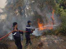 255 Ha de forêts partis en fumée en moins d'un mois