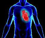 Un cœur artificiel pour les patients en attente de greffe